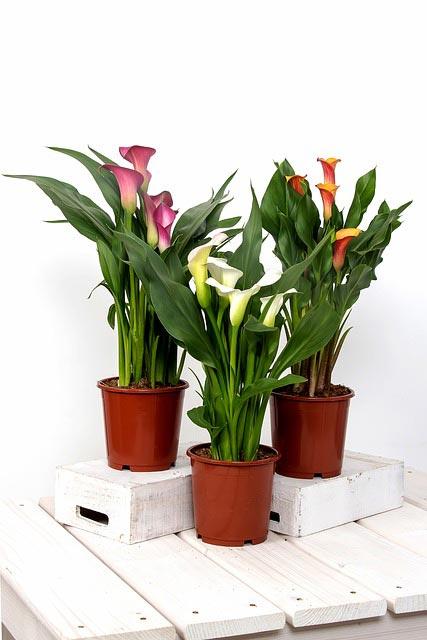 Zimmerpflanzen kompensieren niederige Luftfeuchtigkeit.